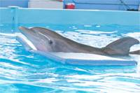 Harry Connick, Jr. Dolphin Tale