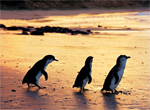 Phillip Island Nature Parks Family 3 Packs Pass
